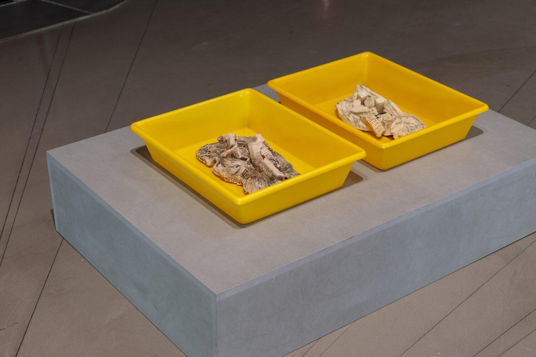 Lois Weinberger, Skyline I und Skyline II, 1994 Ausstellungsansicht, Foto: Kunsthaus Graz/N. Lackner